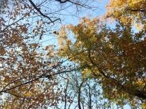 Central Park November 2015 5