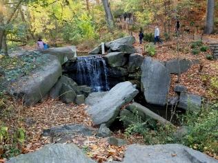 Central Park November 2015 6
