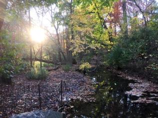 Central Park November 2015 7